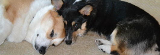 "Read our blog, ""Dances with Corgis"""