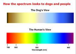Can dogs see color