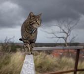 Indoor vs  Outdoor cat