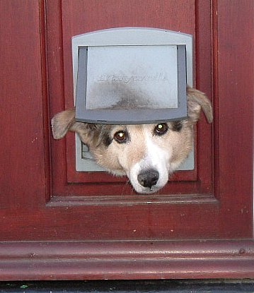 Having a doggie door may be the answer! But before you rush to have one installed for Fido let\u0027s go over the good and bad of this convenient and ... & doggy-door.jpg Pezcame.Com